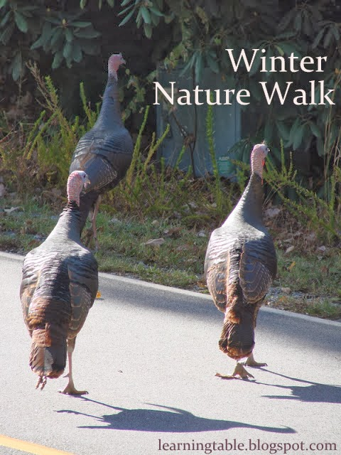 #nature walk @mylearningtable.com