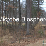 Biosphere project @mylearningtable.com