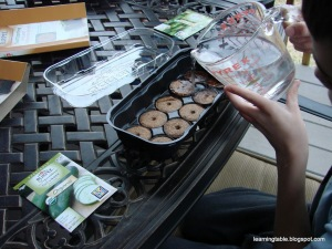 Gardening with Kids: Seed Starting