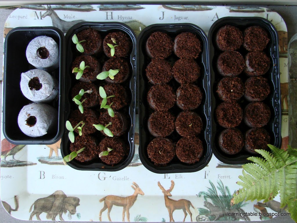 Garden Chemistry: Seed Sprout @mylearningtable.com