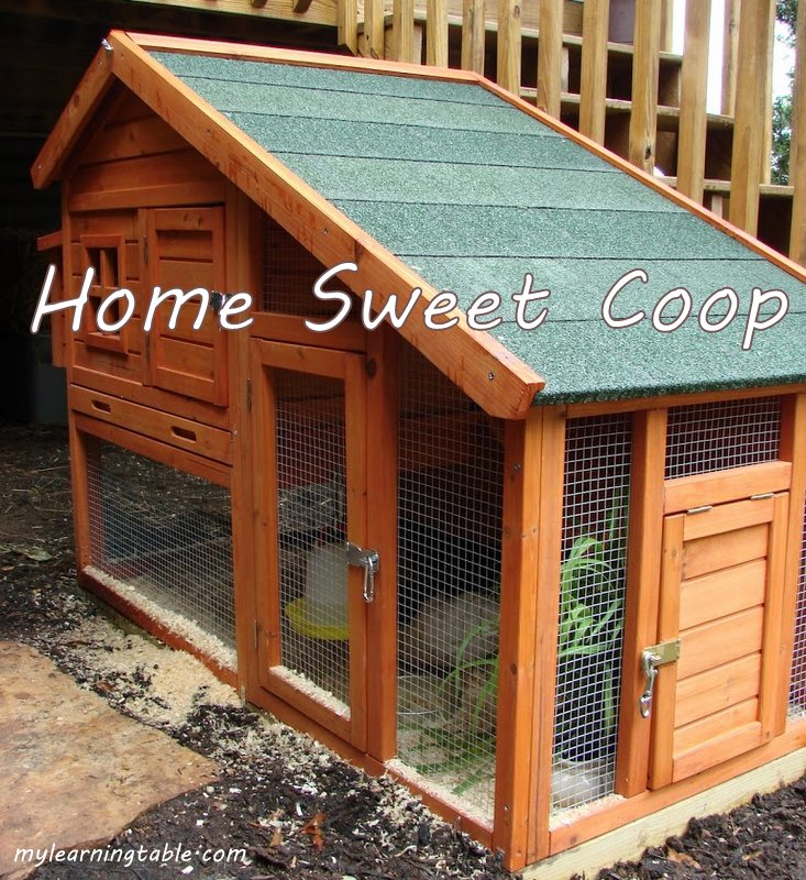 HOME SWEET COOP #backyardchickens mylearningtable.com