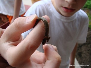 Gardening with Kids: Diggin' Up Worms