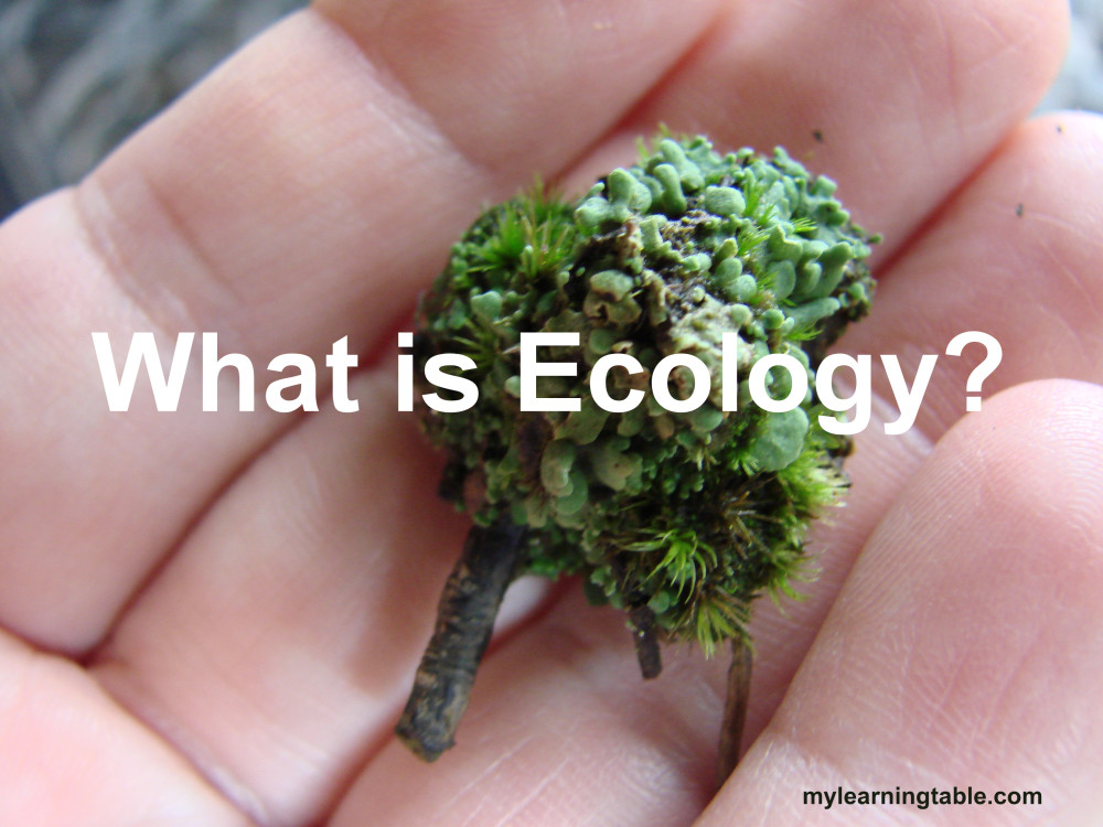 ecology @mylearningtable.com