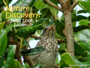 Nature Discovery: Stop, Look, and Listen @mylearningtable.com