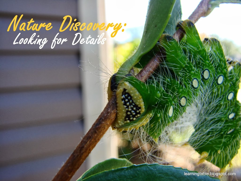 Nature Discovery: Looking for Details @mylearningtable.com