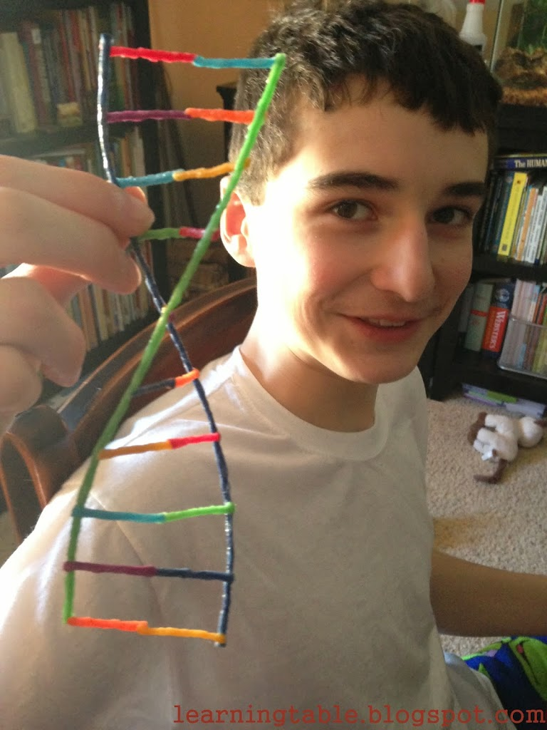 Hands-On Science: DNA – Learning Table