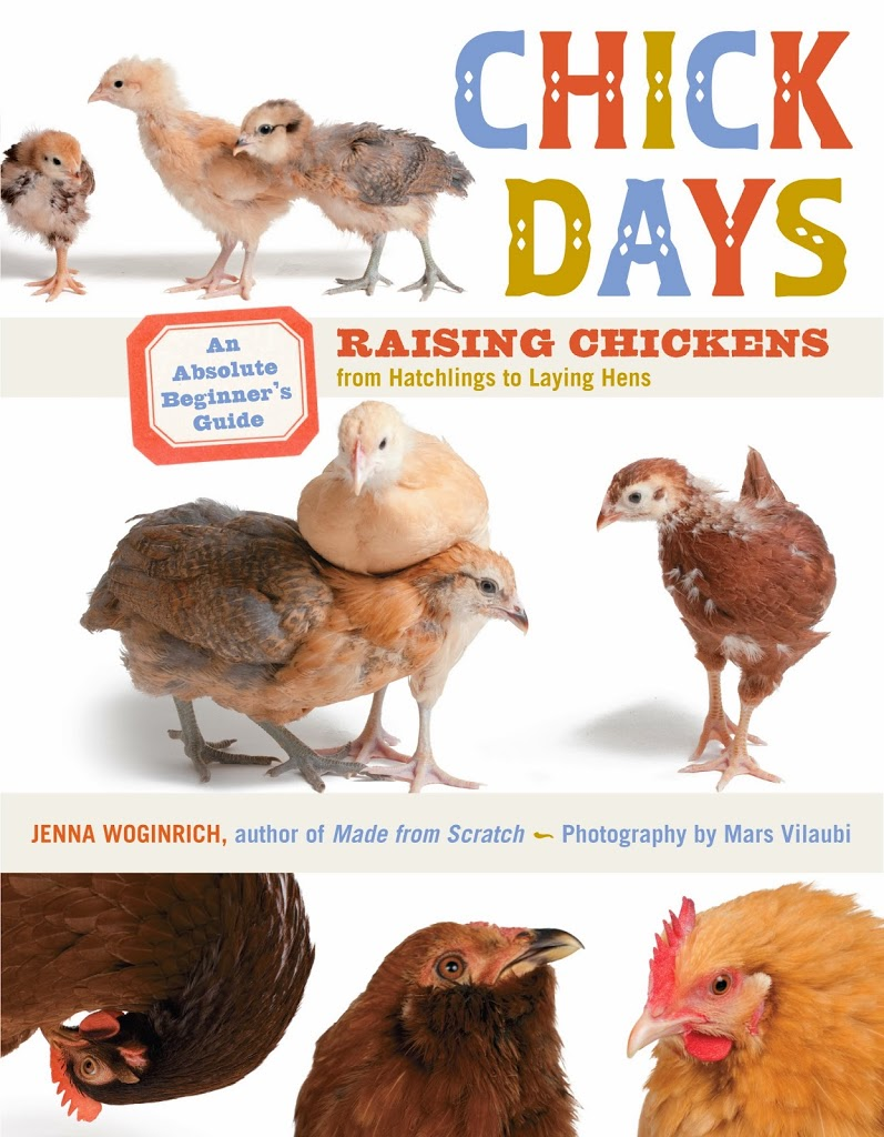 Backyard chickens @mylearningtable.com