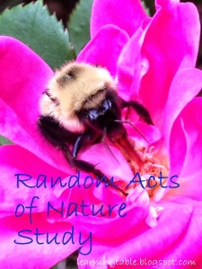 Nature Journal: Random Acts of Nature Study