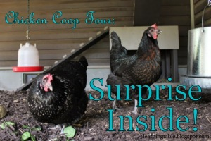 Chicken Coop Tour: Surprise Inside!