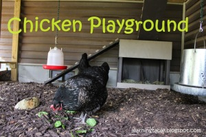 #backyardchickens @mylearningtable.com