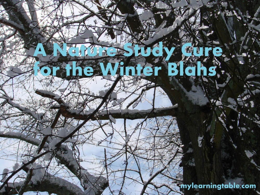 Winter Nature Study @mylearningtable.com