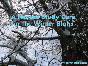 A Nature Study Cure for the Winter Blahs