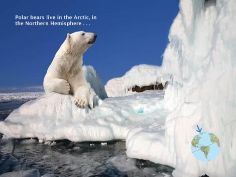 Polar Bears and Penguins mylearningtale.com