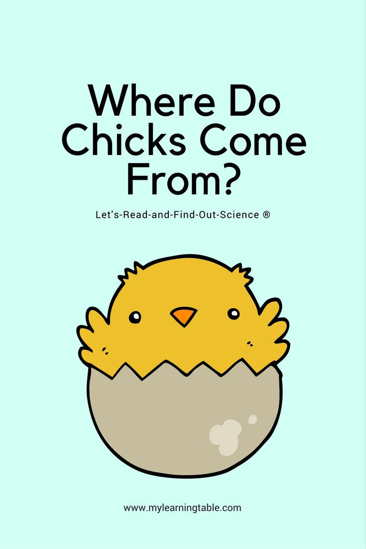 Where Do Chicks Come From? (Let's-Read-and-Find-Out Science 1) is an excellent resource for kids of all ages, and I learned so much about the life cycle of the chicken that I didn't know before reading it. Many, many adults do not realize that not all chicken eggs are fertile.